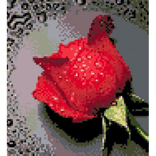 Róza czerwona