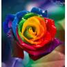 Zestaw do diamond painting - Kolorowa róża