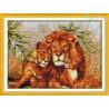 Rodzinka lwów