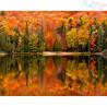 Malowanie po numerach - Urokiliwa jesień