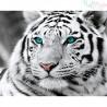 Malowanie po numerach -Tygrys