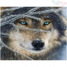 Malowanie po numerach -Głowa wilka