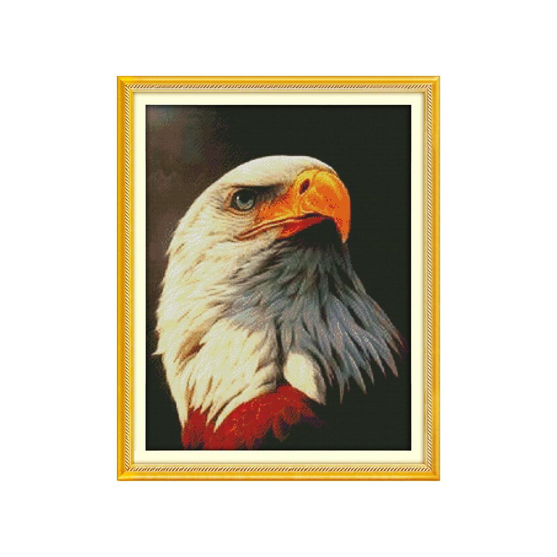 Bielik amerykański (1)