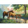 Konie przy rzece